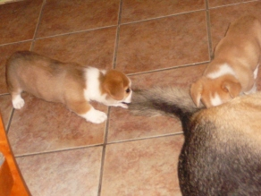 HUM! You have tail... I like it's to play....