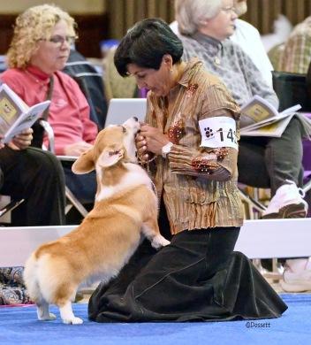 Les chiens ne mentent jamais quand ils parlent d'Amour (Jeffrey Moussaieff Masson)