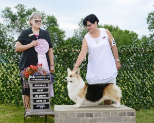 ozzie reserve best in show